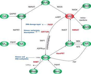metabolic-pathway-analysis